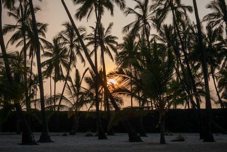 Hawaii_Palm_Trees