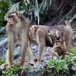 Kuala Lampur, Malaysia – Monkey Hill